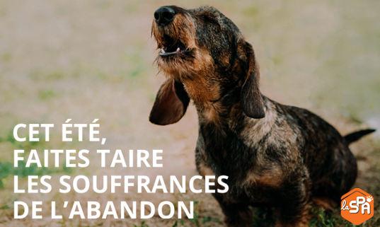 CET ÉTÉ, FAITES TAIRE LES SOUFFRANCES DE L'ABANDON