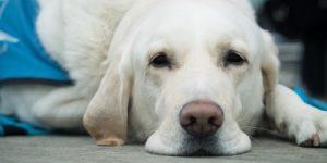 Actes médicaux et chirurgicaux pour chiens