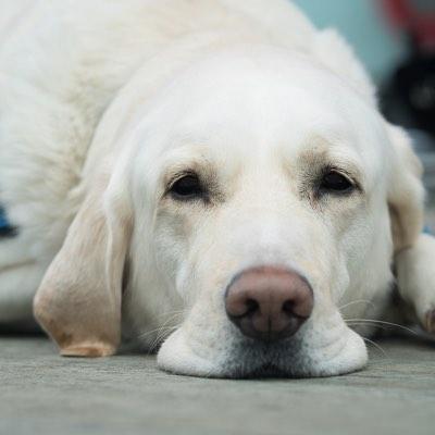 Actes medicaux et chirurgicaux pour chiens-2