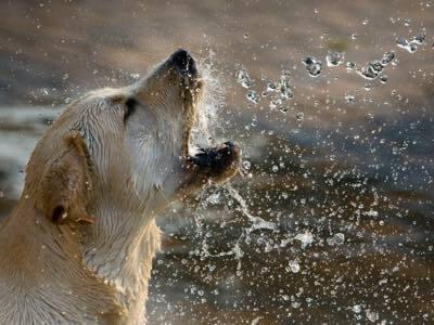chien mourrir buvant trop eau-2