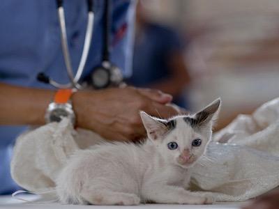 actes medicaux chirurgicaux