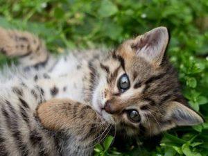 Adopter ou acheter un chat
