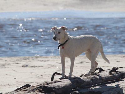 chien a la mer