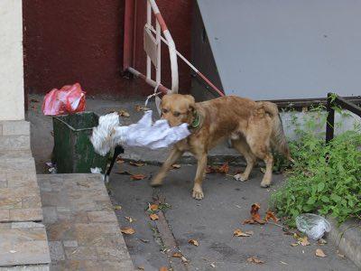 chien mange tout ce qu il trouve