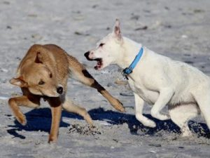 chien qui mord
