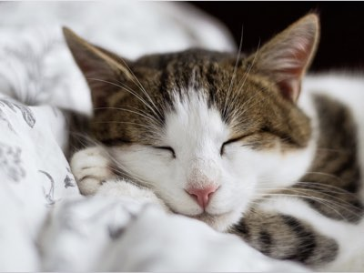 environnement de vie pour un chat