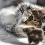 frais veterinaire chaton