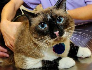 Le cancer chez le chat - que faire ?