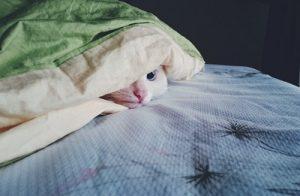 Maladies les plus fréquentes chez le chat