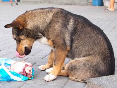 manque appetit chien