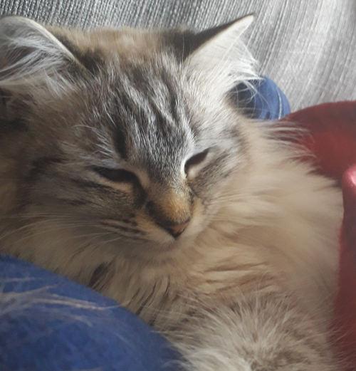 cancer du chat apparu au cou