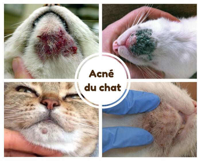 acne du chat