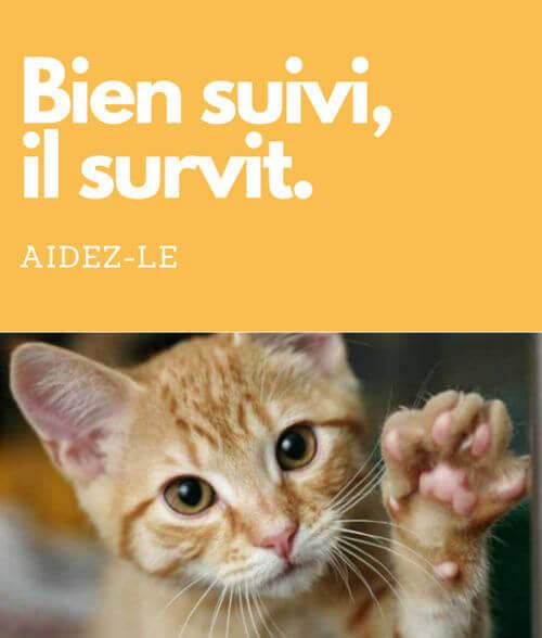 frais vétérinaires chat, soins