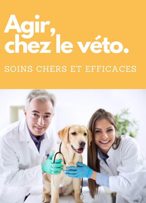 aller chez le vétérinaire en cas de parvovirose canine