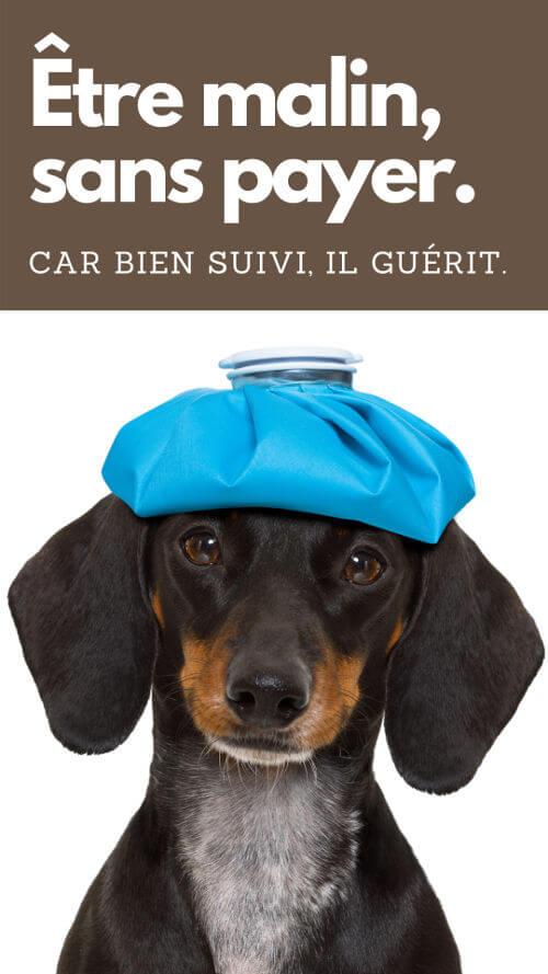 soins veterinaires prix