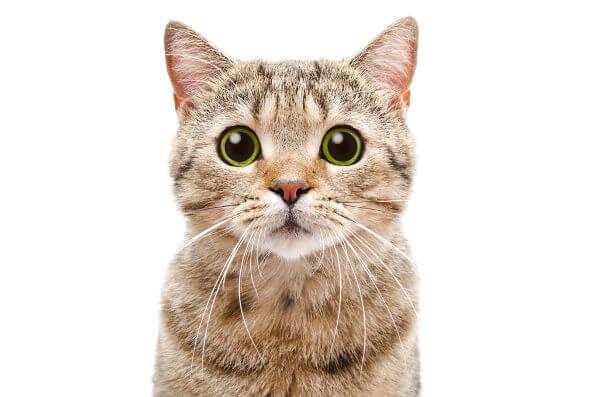 tout savoir sur la stérilisation du chat : prix, raisons