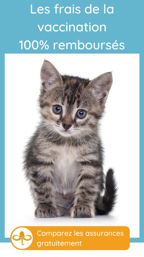 comparer les remboursements de la castration du chat