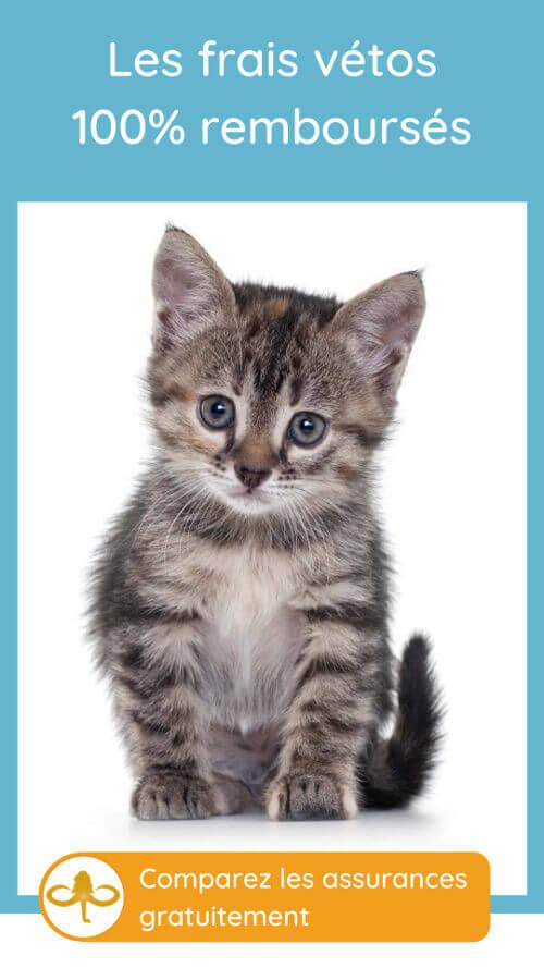frais vétérinaires pour un chaton : remboursement