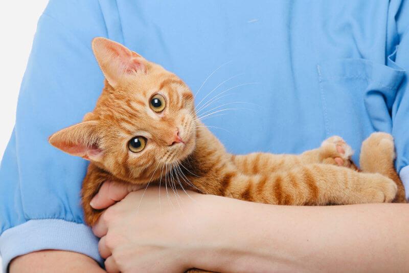 frais vétérinaires chaton et chat