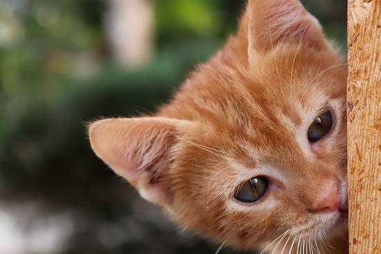 Quel cadeau pour chat offrir