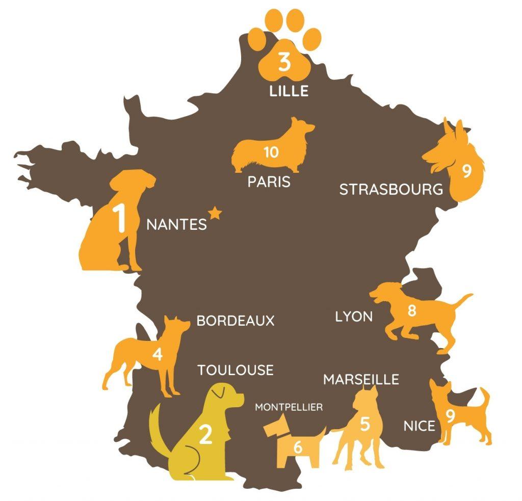 Classement des grandes villes de France selon le coût vétérinaire moyen du moins élevé au plus élevé